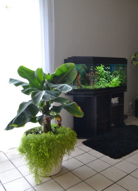MES AQUARIUMS 240 L Communautaire et 30 L Aquascape + photos - Page 3 6980585603