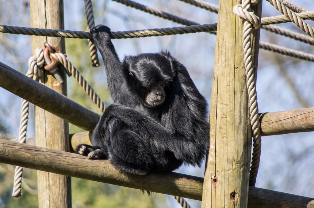 Zoo de Lille 698950IGP3925
