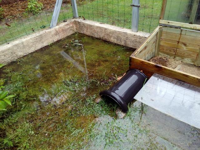 inondation :mes veilles sauvées de justesse ! 6996072807