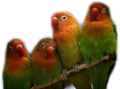 Tubes rapasse et oiseaux 701123Mellmelgibson1e2