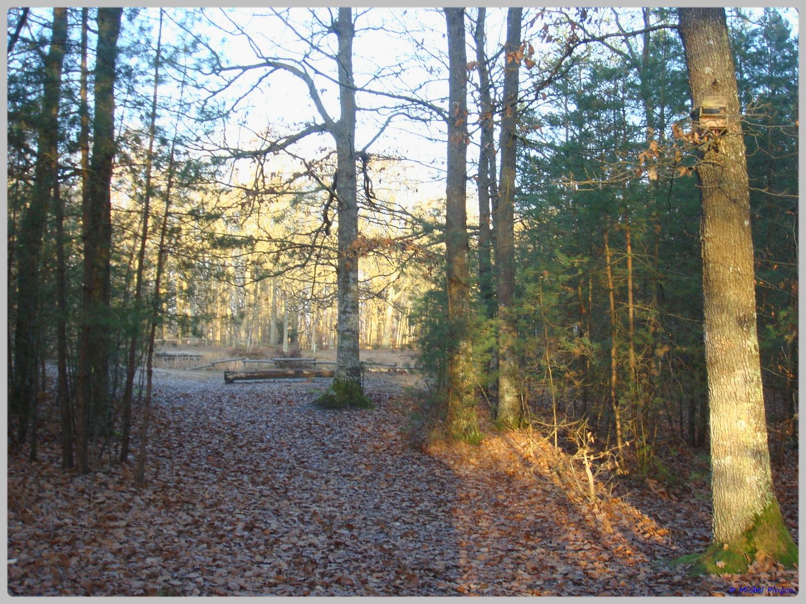 [fil ouvert] la forêt dans tous ses états - Page 10 709178DSC011624