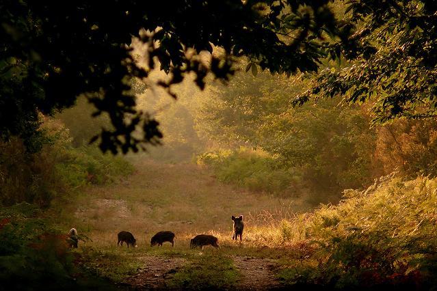 Belles photos d'animaux c'est ici !  - Page 6 709185Copie2deCopiedeP1310345