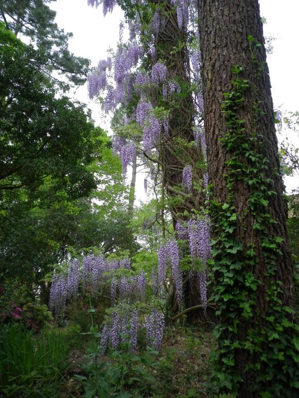 Quelques floraisons 710261IMGP1439