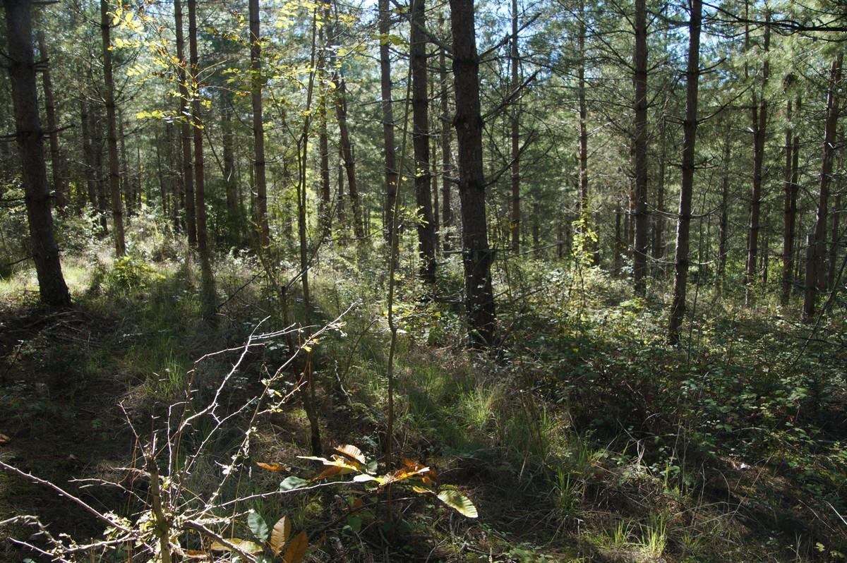 [fil ouvert] la forêt dans tous ses états - Page 14 711380DSC07723