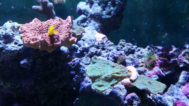 Mon premier aquarium eau de mer - Page 3 71335120141201144552