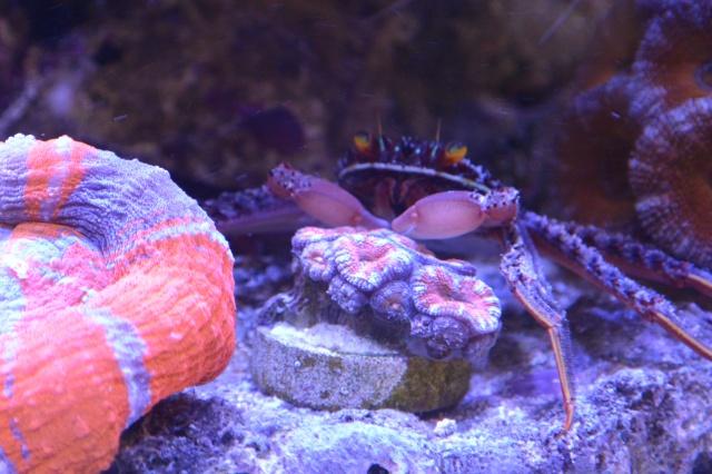 Re: Redg's paradise reef 714616DSC3246