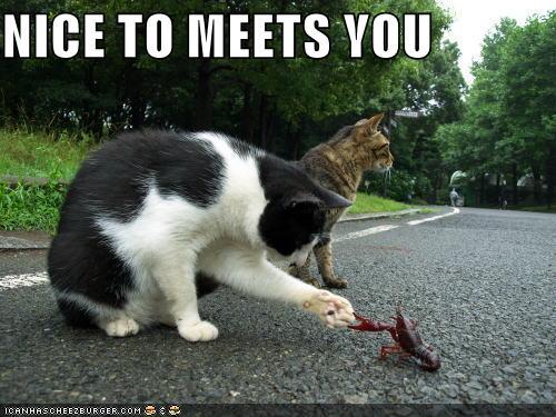 Naiyore,au combat 716708lolcatscatshakes