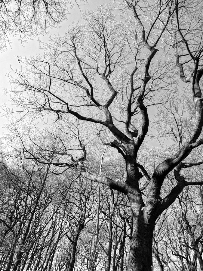 [fil ouvert] la forêt dans tous ses états - Page 13 717733050Copier