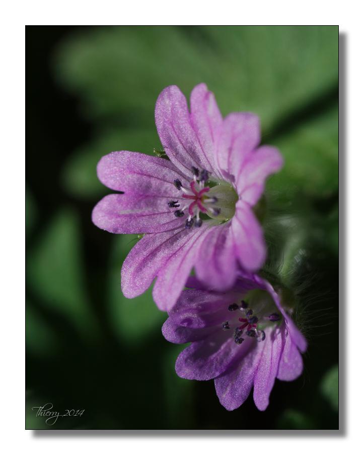 [Fil ouvert] Fleurs et plantes 719671fleur