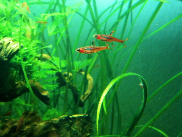 Mon Scaper's Tank 50L Aquascaping - Page 2 721567IMG0554