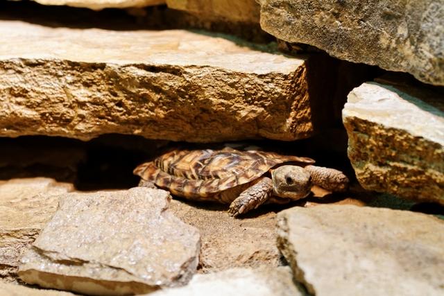 Le zoo de Bâle 723087ZooBleavril2012640x480007