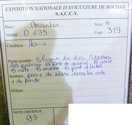 exposition d'aviculture Foire ST MATTHIEU 27 et 28 Septembre 2014 - Page 3 723546P1150877