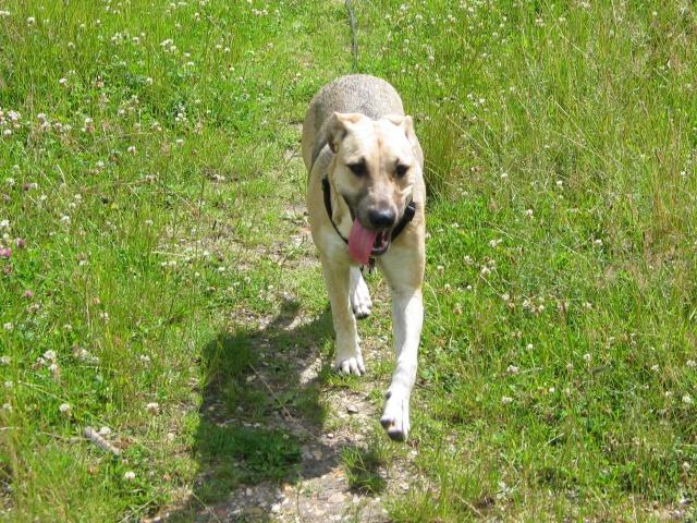 Lila, adorable chienne croisée, née en octobre 2011 726695IMG9340