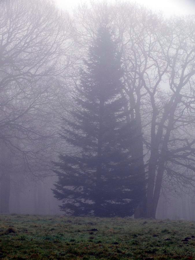 [fil ouvert] la forêt dans tous ses états - Page 11 7278842911