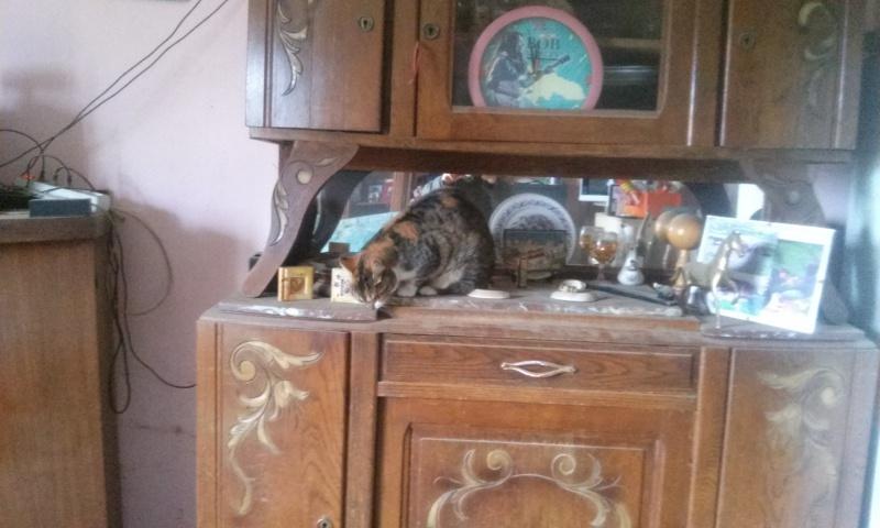 DUCHESSE - chatte femelle, née 2011/2012, borgne - (PASCANI) - adoptée par Chantal Pascal (dpt 63) - Page 4 72993620151206115540