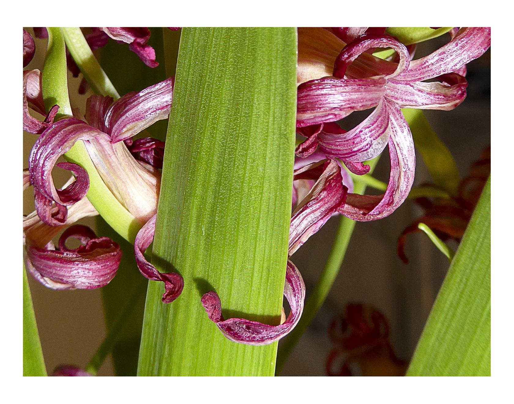 Naissance et Agonie florale 730309P1010915ter