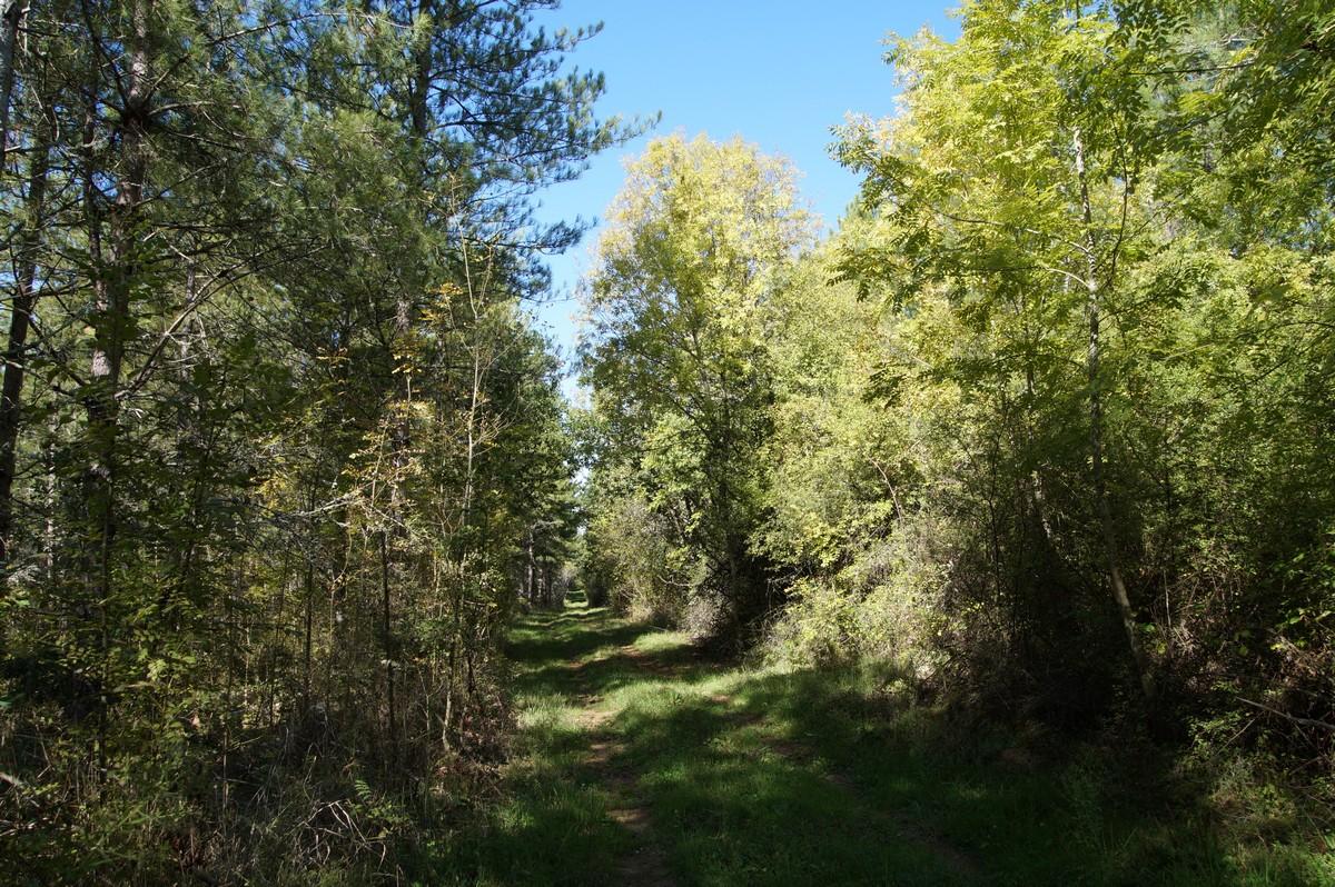 [fil ouvert] la forêt dans tous ses états - Page 14 733445DSC07717