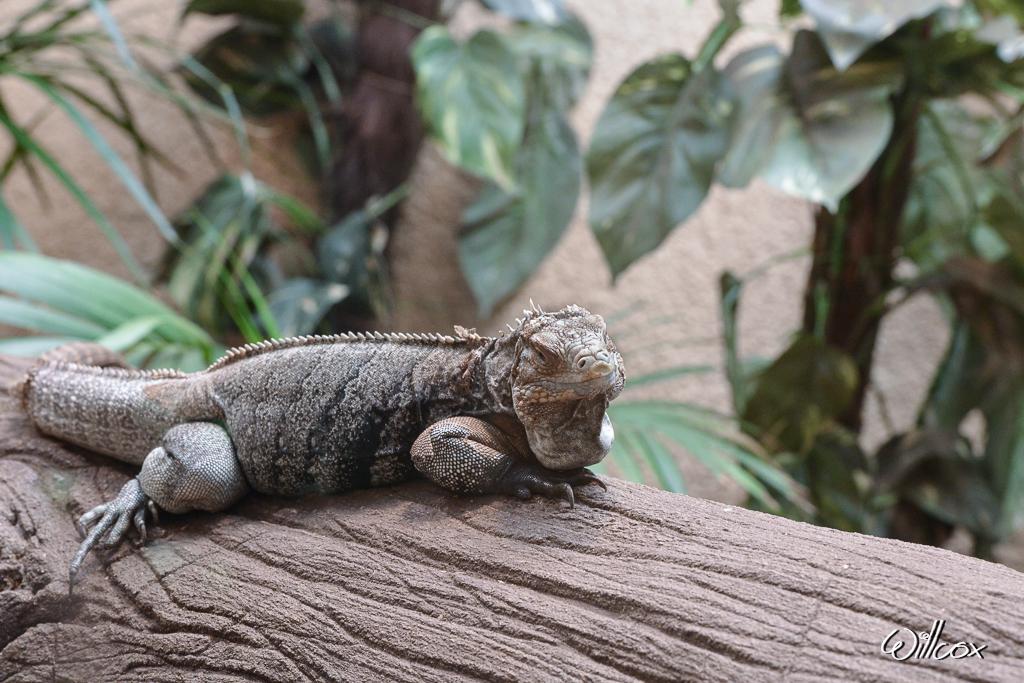 [Fil ouvert à tous] Reptiles, serpents, tortues, amphibiens, ... 735252anvers12