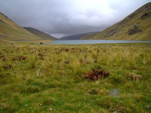 Les écosystèmes boliviens en photos... 741780bofedale4300m4