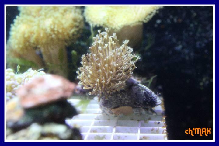 ce que j'amène en coraux a orchie  742985PXRIMG0031GF