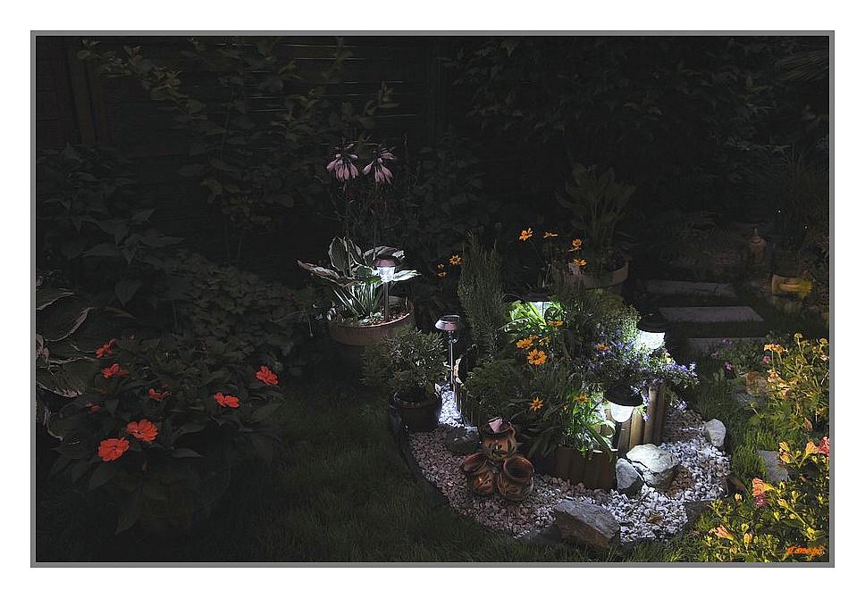 Nouvel essai photos de nuit dans mon jardin série 1 743113020