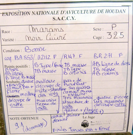 exposition d'aviculture Foire ST MATTHIEU 27 et 28 Septembre 2014 - Page 3 744713P1150792