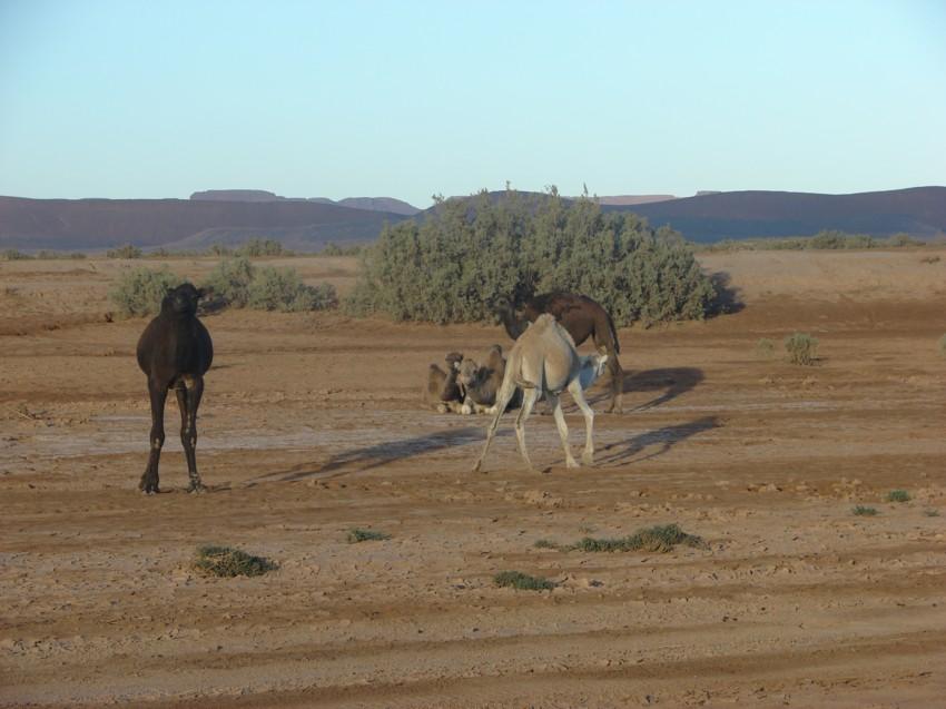 retour maroc 2012 - Page 2 746966169