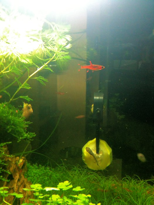 Mon Scaper's Tank 50L Aquascaping - Page 2 753054IMG0490
