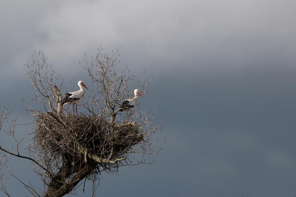 Mes oiseaux 753780IMG1845Copier