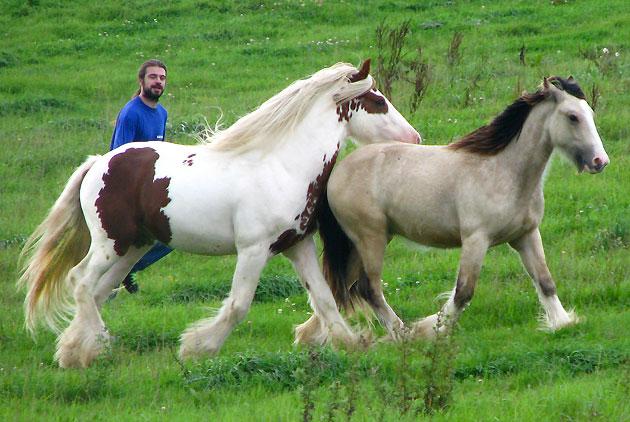 - Les mâles des Légendes Celtiques 755035IMG0823