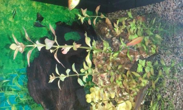 Plante trouvée en nature 758952201504280949131