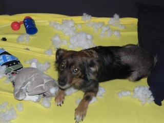 """Photos de vos chiens """"malheureux"""" 762405DSCN6787"""