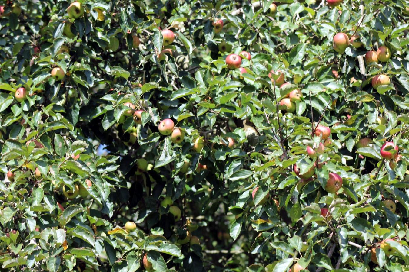 [Fil ouvert] Fruit sur l'arbre - Page 9 762440011Copier