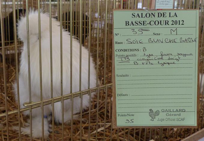 La Poule Soie GR, standard et variétés 762655P1050197