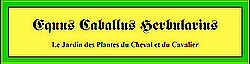 Plantes utiles aux chevaux 762825zcmn9wja
