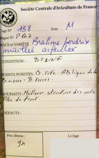 salon de l'Aviculture de Paris du 22/02/2014 au 02/03/214 - Page 4 763871P1130497