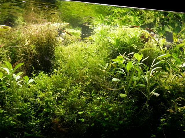 Mes (plus) de 60 plantes dans mon 240 litres - Page 4 76833220140713203021