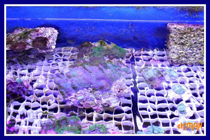 ce que j'amène en coraux a orchie  768663PXRIMG0008GF
