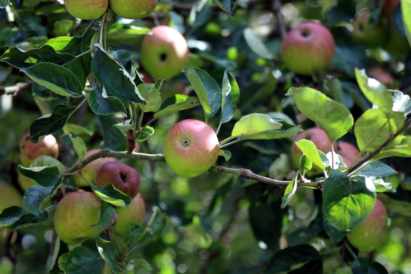 [Fil ouvert] Fruit sur l'arbre - Page 9 772485016Copier