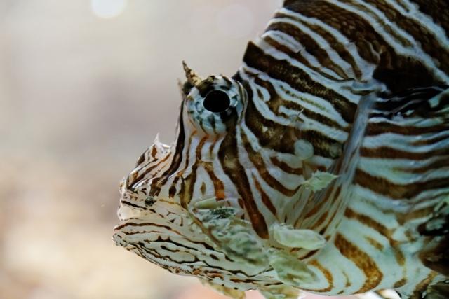 Le zoo de Bâle 775949ZooBleavril2012640x480004