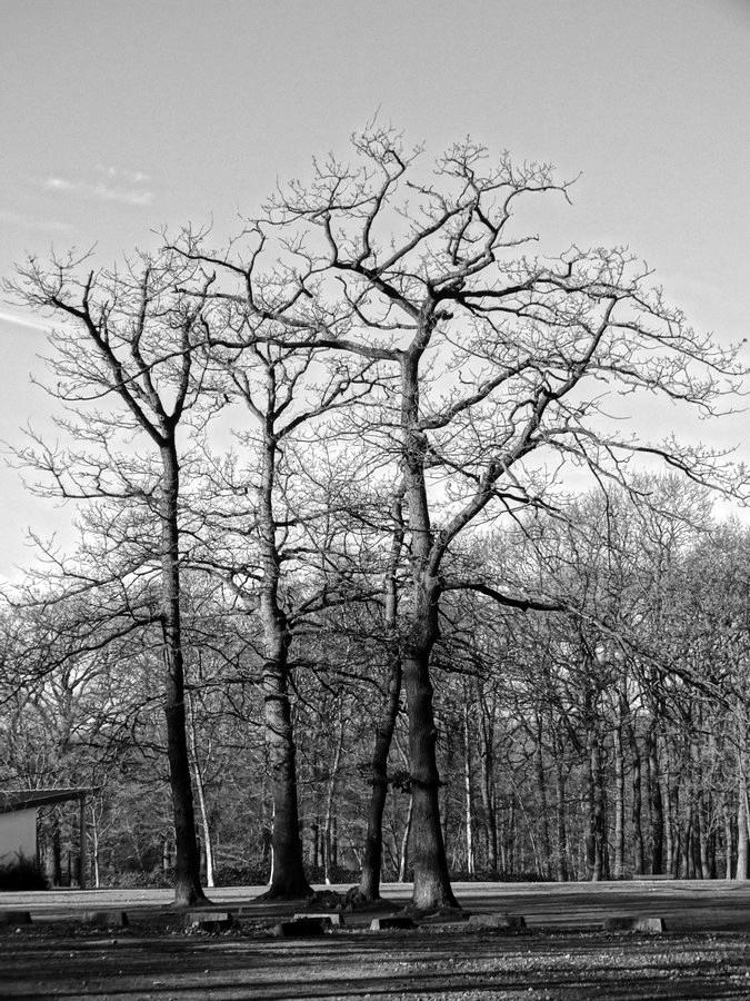 [fil ouvert] la forêt dans tous ses états - Page 13 781509013Copier
