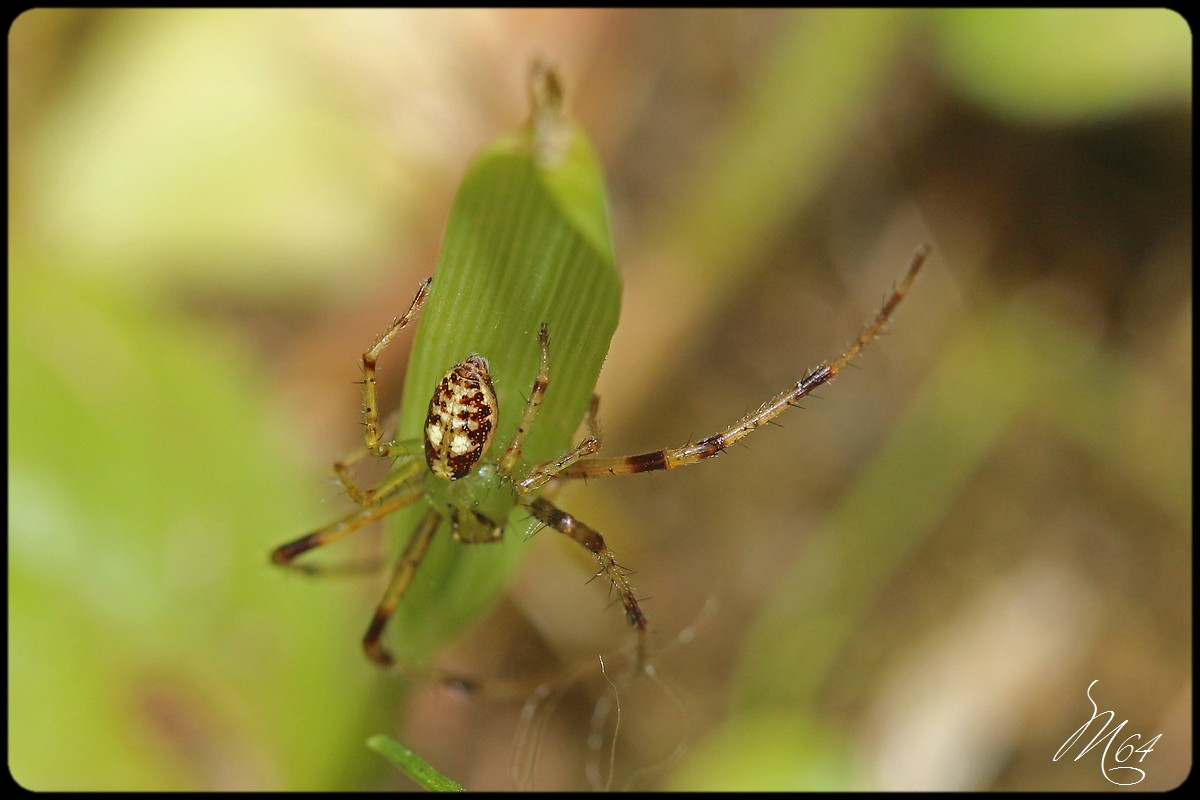 L'araignée à Gilou  786199IMG9589