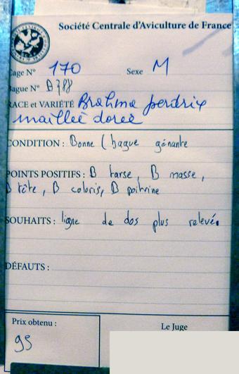 salon de l'Aviculture de Paris du 22/02/2014 au 02/03/214 - Page 4 789142P1130516