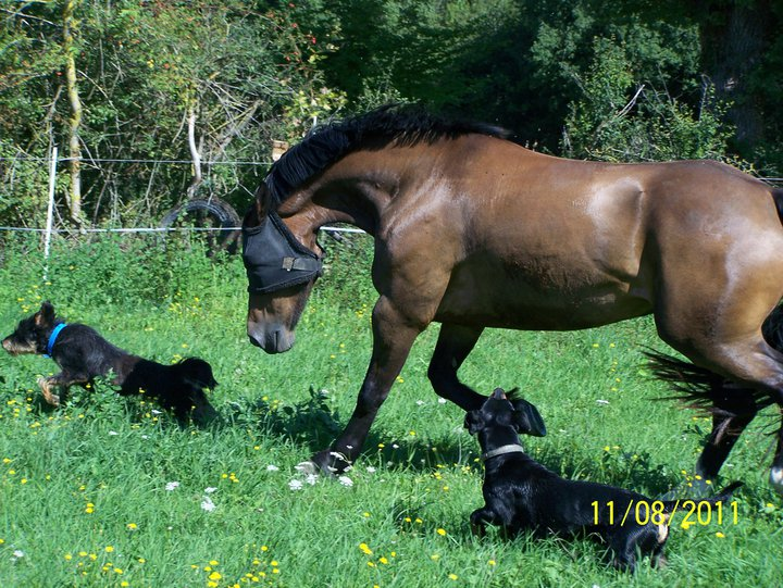 Urgence pour un chien croisé Griffon 789978email2