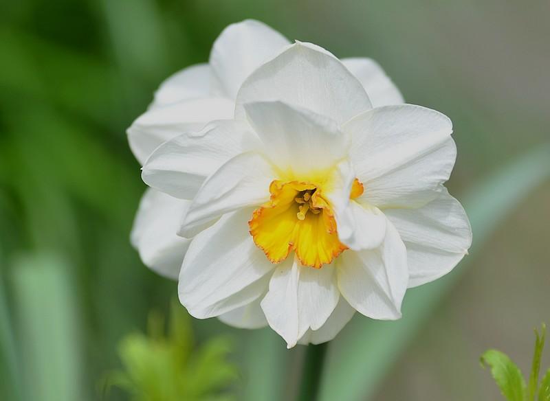 Toutes ces fleurs qui embellissent nos regions  790892025