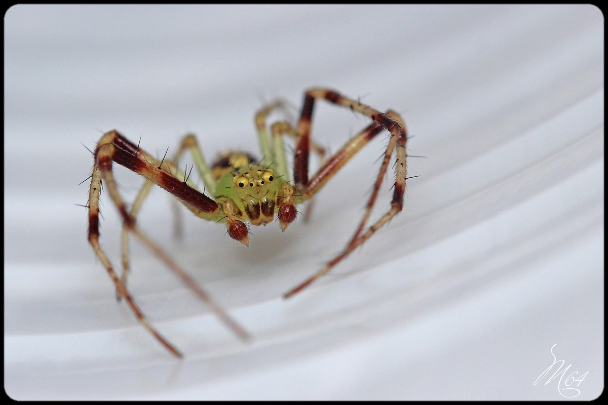L'araignée à Gilou  790917IMG9582