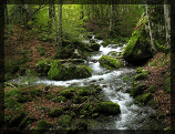Le Ruisseau de la Forêt
