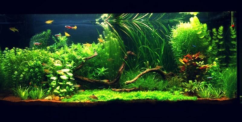 plantage d 39 un aquarium 240l avecd guppies. Black Bedroom Furniture Sets. Home Design Ideas