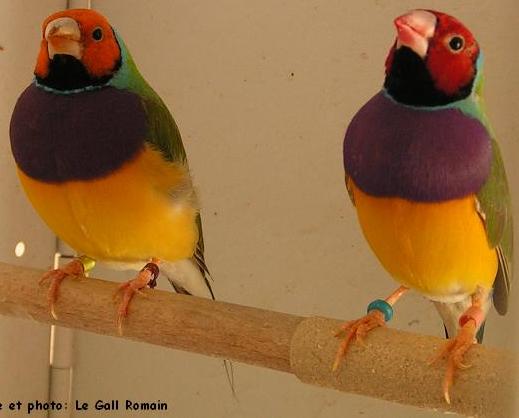 Tubes rapasse et oiseaux 794193Mellmelgibson1e1