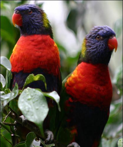 Tubes rapasse et oiseaux 798492Mellmelgibson125